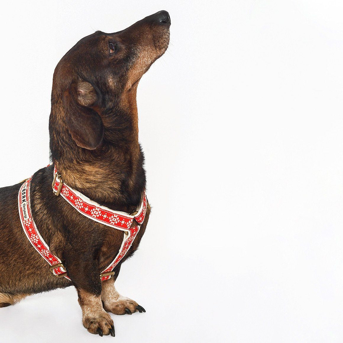 Nagual II dog harness