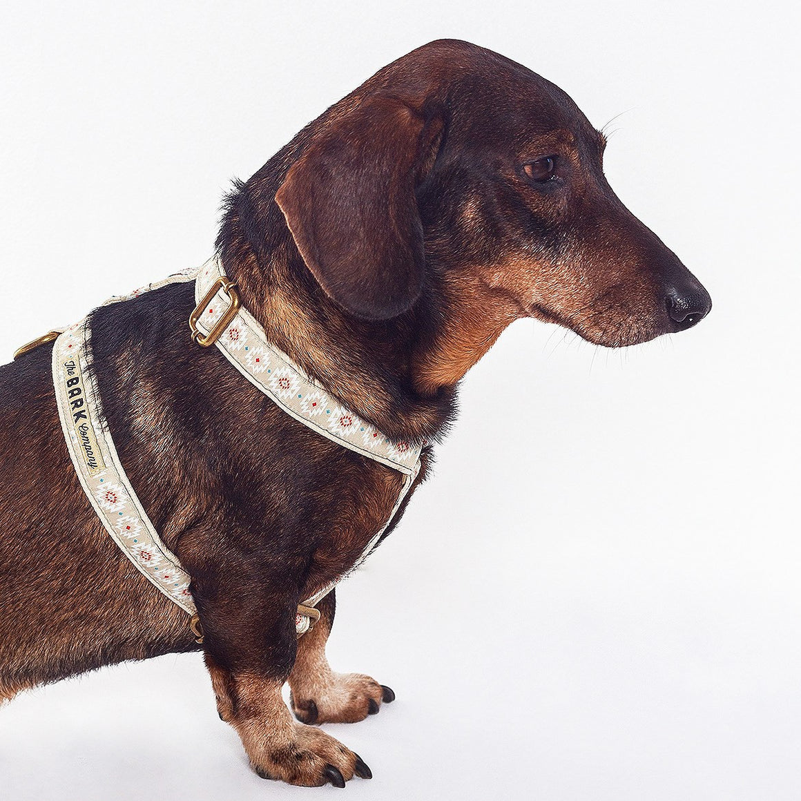 Geronimo dog harness - The Bark Co. Handmade dog Harness