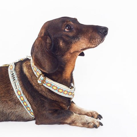 Navajo dog harness from The Bark Co - 1