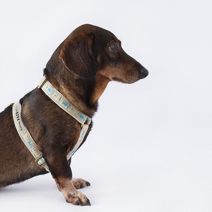 Popoca dog harness - The Bark Co. Handmade dog Harness