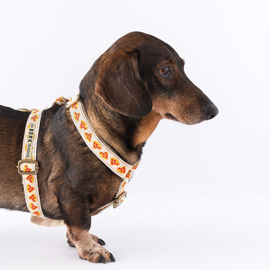 Pizza Dog Harness - The Bark Co. Handmade dog Harness