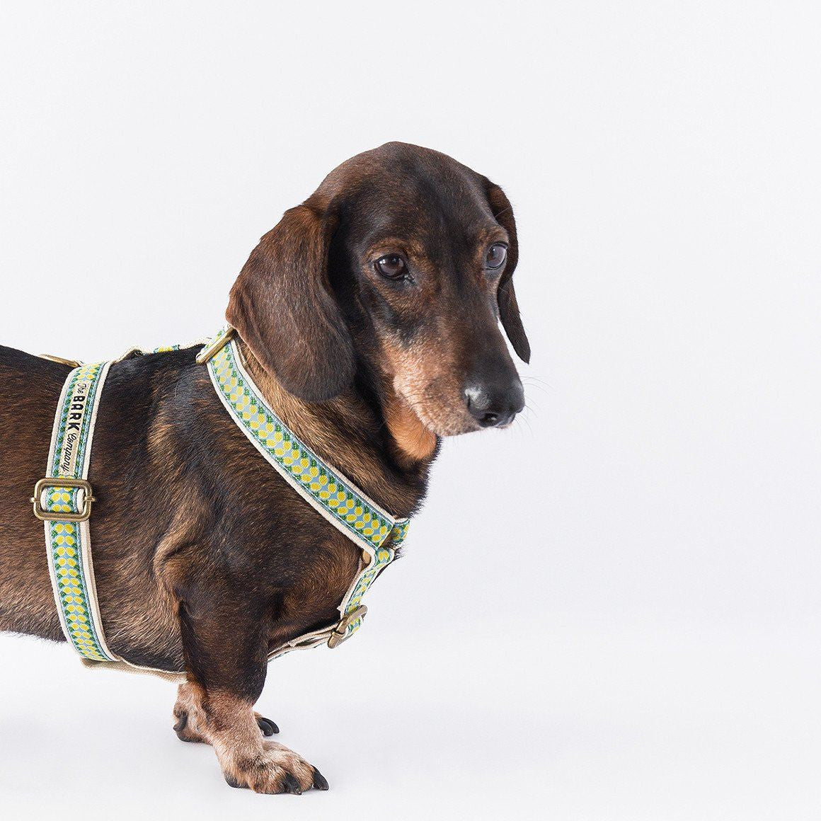 Pineapple dog harness from The Bark Co - 1