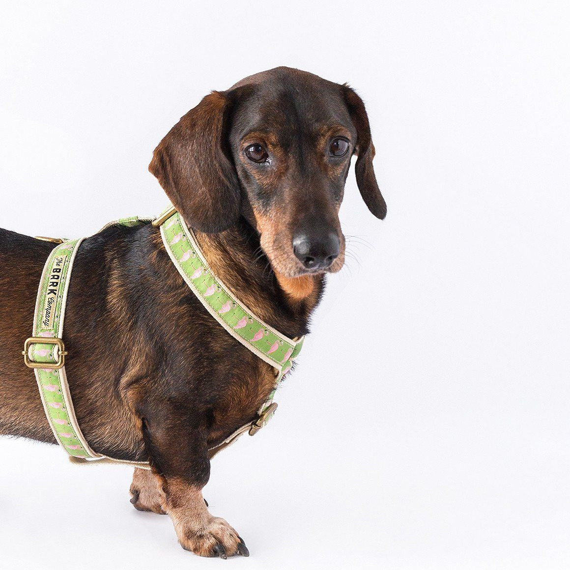 Flamingos dog harness - The Bark Co. Handmade dog Harness
