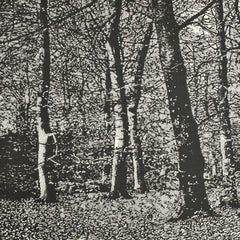 Monochrome study of trees and woodland foliage by Trevor Price at Iona House Gallery