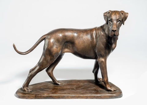 Tessa Pullan 'Great Dane' bronze limited edition 2/ 9 H10in x L13in (25.5 x 33cm)