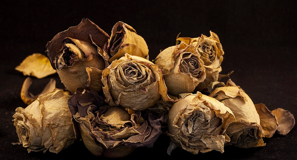 Photograph of roses by Amr Fadl at Iona House Gallery