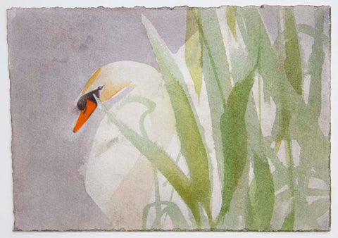 Claire Harkess 'Mute Swan II' watercolour 15x21cm