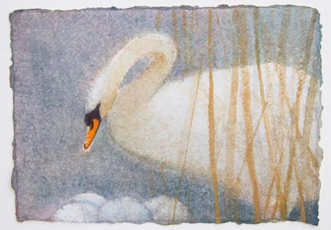 Claire Harkess 'Mute Swan I' watercolour 15x21cm