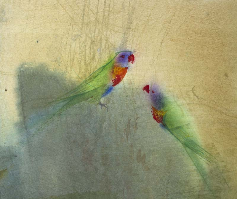 Claire Harkess 'Rainbow Lorikeets' watercolour 26x29cm