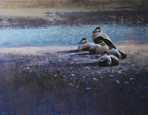 Ewoud de Groot 'Flock of Eiders' oil on linen 100x130cm