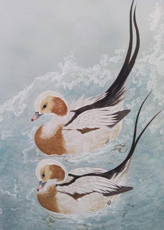 Gary Woodley 'Long tailed duck' 62x50cm Gouache on paper