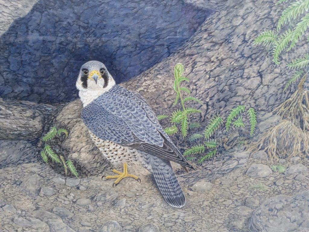 Gary Woodley 'Peregrine Falcon' 91x116cm Gouache on Himalayan handmade paper