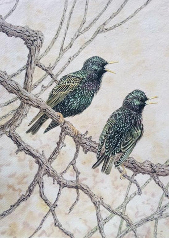 Gary Woodley 'Starlings' 64x32cm Gouache on Indian grass paper