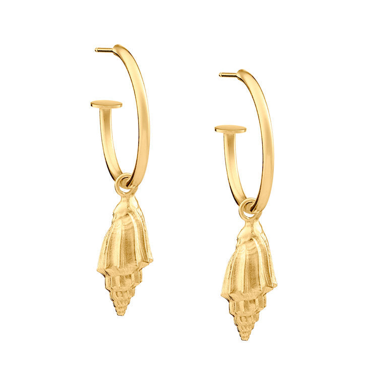Wild and Fine (Jessica Hickman-Woolcott) Gold Vermeil Conch Shell earrings 22 x 23 mm, 1.8 mm round wire.