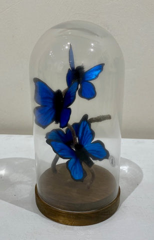 Jodie Glen-Martin 'Butterflies' paper and glass H21cm