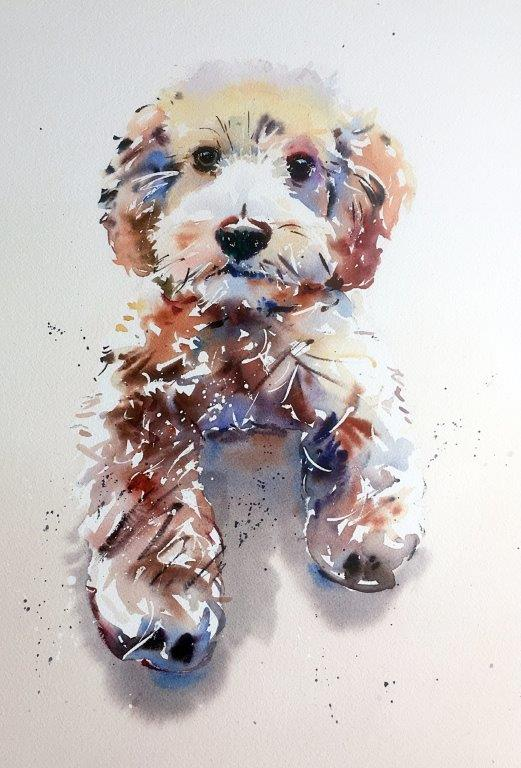 Jake Winkle watercolour of a Cockerpoo dog at Iona House Gallery