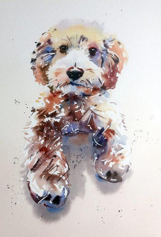 Jake Winkle 'Cuddly Cockerpoo' watercolour 47x33cms