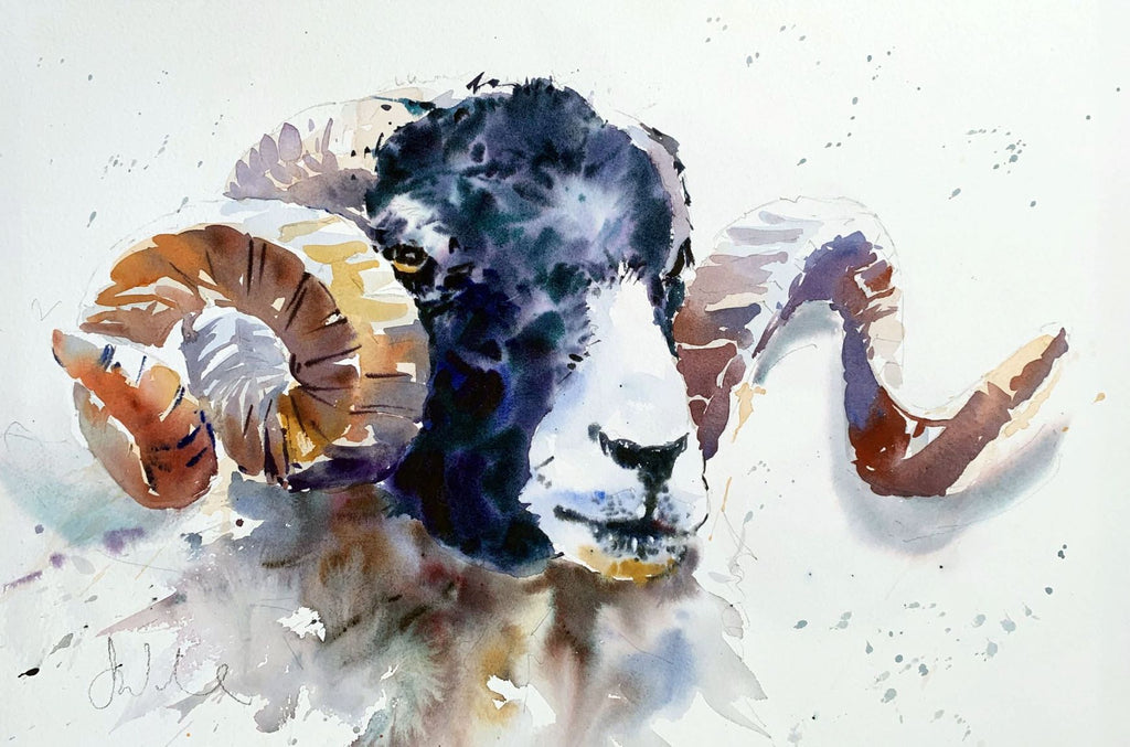 Watercolour study of a Ram's head in loose style by Jake Winkle at Iona House Gallery