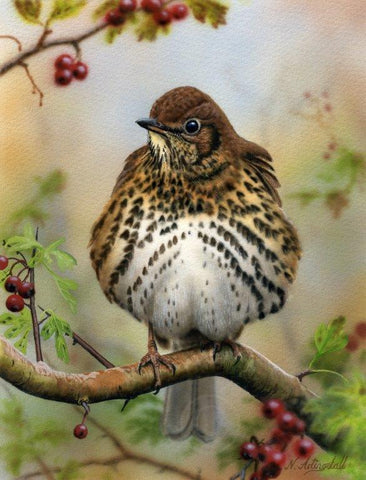 Nigel Artingstall 'Song Thrush' gouache on watercolour board 25x15cm