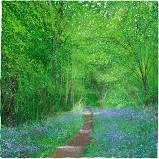 Paul Evans 'Bluebell Way' limited edition print (unframed)