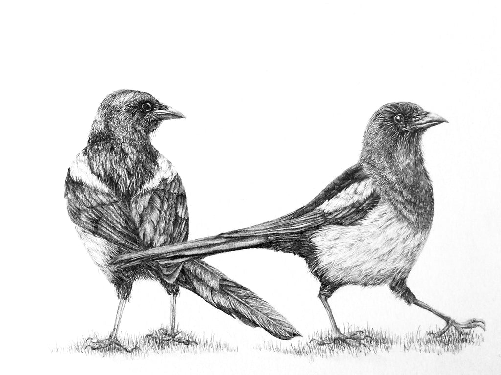 Magpies in graphite by Sue Side at Iona House Gallery