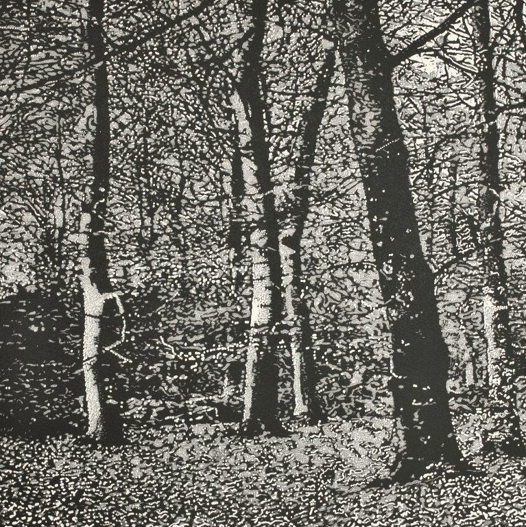 Monochrome study of woodland by Trevor Price at Iona House Gallery