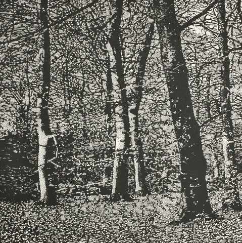 Trevor Price 'Woodland I' drypoint and engraved relief print - paper and image size 35.5x35.5cm