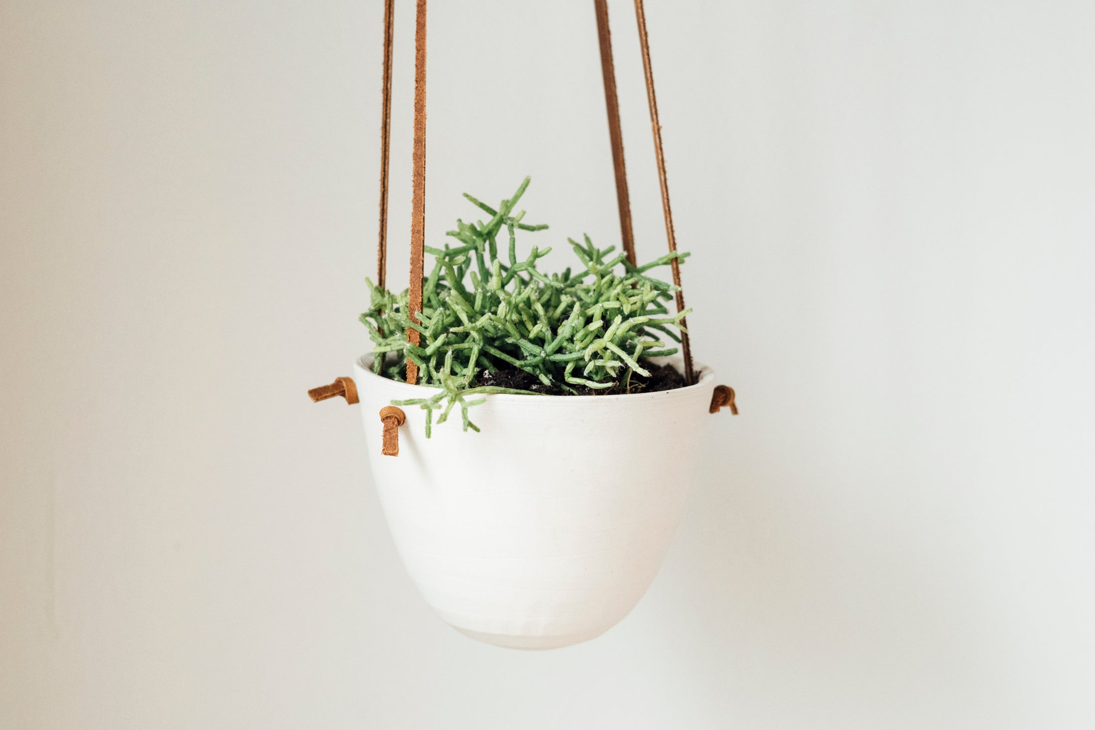 small knot planter - brown + white