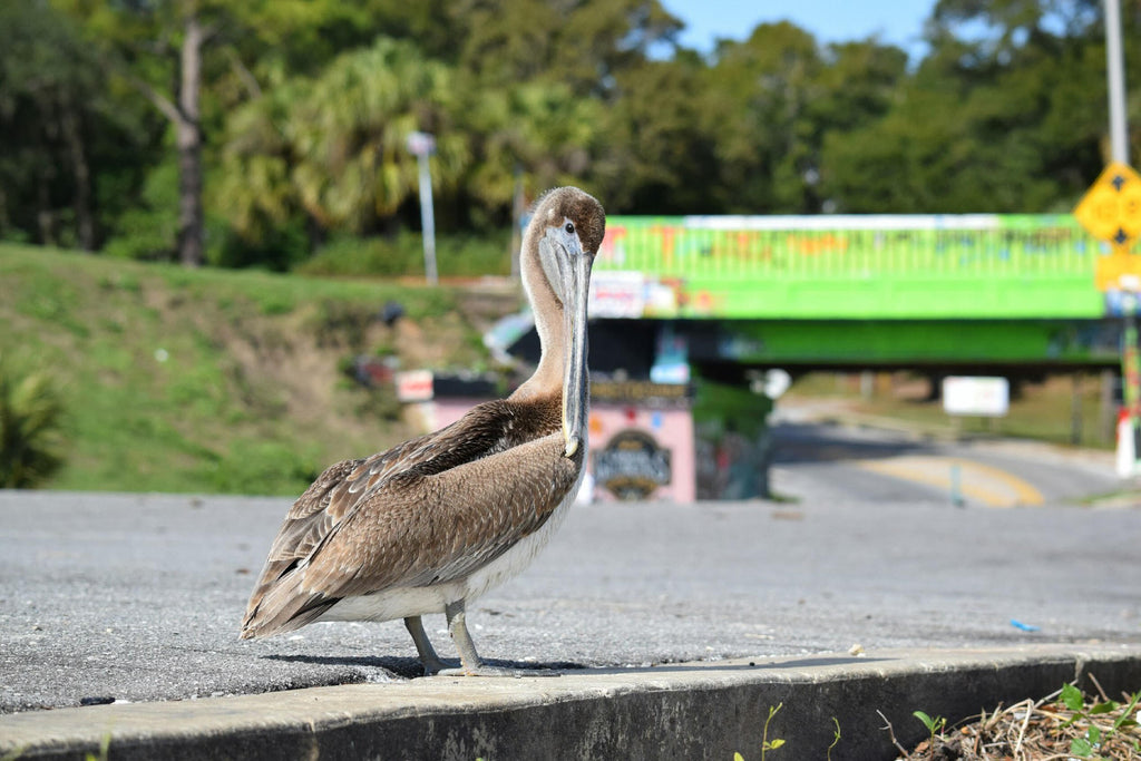 "Take a walk on the ""wild side."" Wildlife at the Graffiti Bridge"