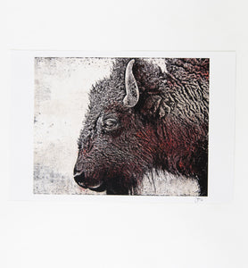 Where The Buffalo Roam Print by Boxing Bear Co.