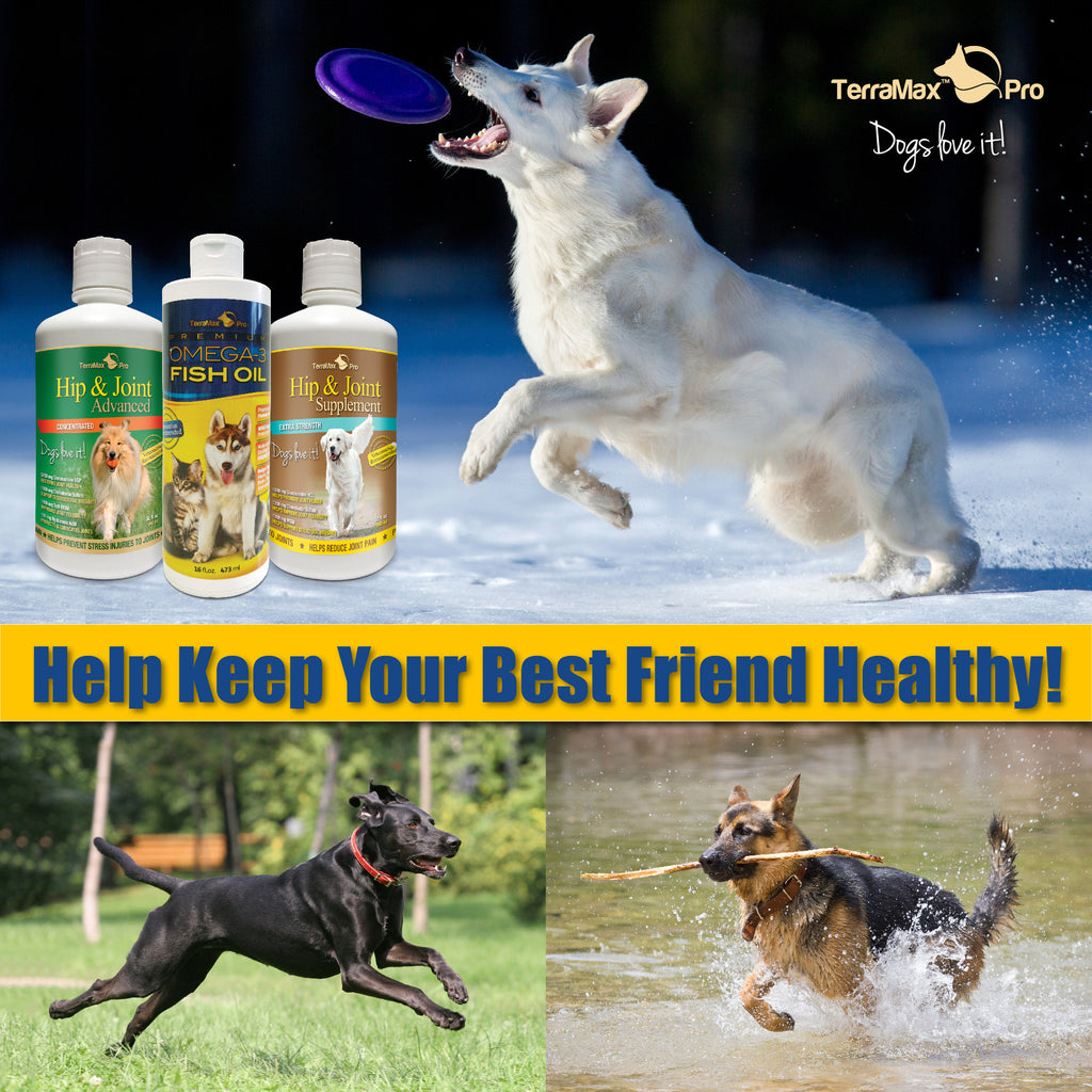 Premium Omega-3 Fish Oil for Dogs and Cats