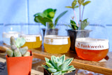Beer and Plants!