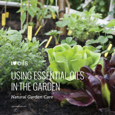Essential Oils in the Garden