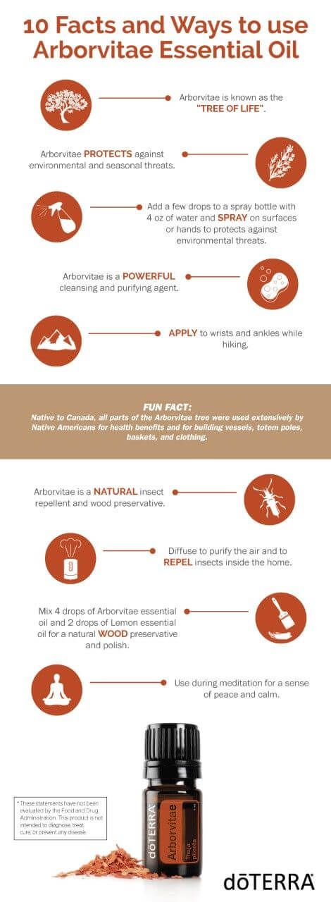 Arborvitae facts