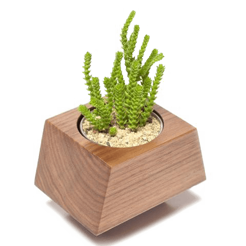 Box Car Planter Gift Set