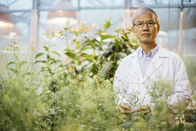 Ancient camelina receives federal funding