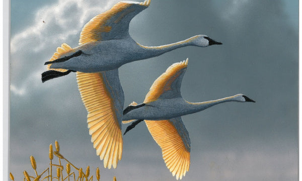 Duck Stamp winner announced