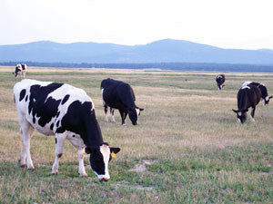 My Montana Farmer video: How Kalispell Kreamery makes delicious dairy products