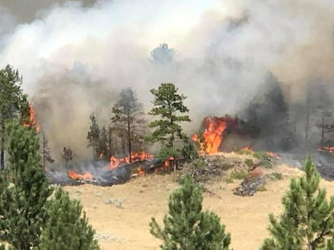miles city lodgepole complex forest fire montana