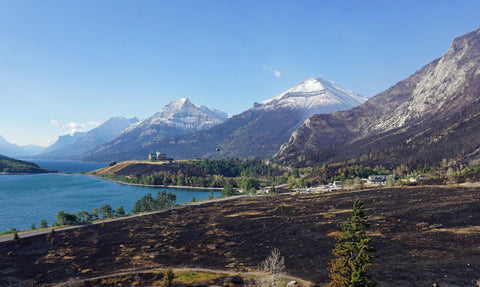 Charred grounds around the Prince of Wales Hotel at Waterton Lake, on the north side of Glacier National Park.
