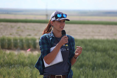 MSU wheat stem sawfly research, Uta McKelvey, Montana wheat farming, Montana Living