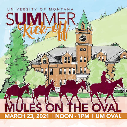 Mules on the Oval at university of montana, montana living magazine, um summer courses, mule pack train montana
