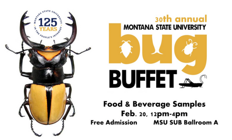bug buffet bozeman, edible insects, MSU, montana living