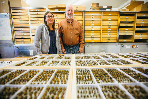 "A group of MSU researchers have published a paper, ""Bumble Bees of Montana,"" in the Annals of the Entomological Society of America. The paper's co-authors were Michael Ivie, associate professor of entomology in the MSU Department of Plant Sciences and Plant Pathology, Kevin O'Neill, professor of entomology in the MSU Department of Land Resources and Environmental Sciences, Casey Delphia, MSU research scientist, and Amelia Dolan, former MSU entomology graduate student, all within the MSU College of Agriculture. Delphia, left, is pictured here with Ivie. MSU photo by Adrian Sanchez-Gonzalez."