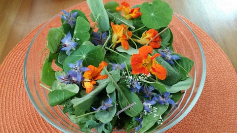A sample of edible flowers grown in Livingston, Montana. Photo by Sarah Hussey