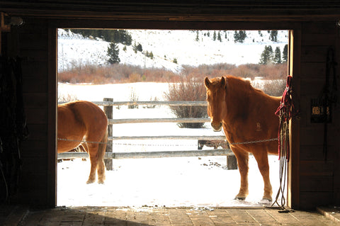 Draft horses wait patiently outside the barn to go to work at the B Bar Ranch. David Reese photo