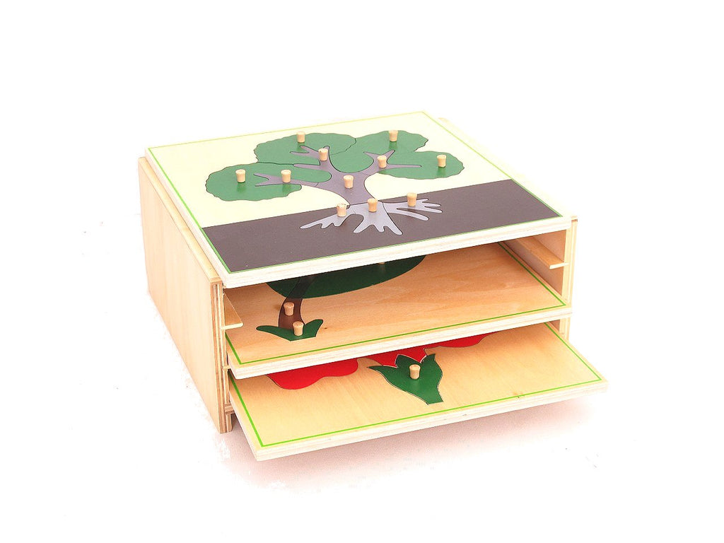 3 Botany Puzzles & Cabinet