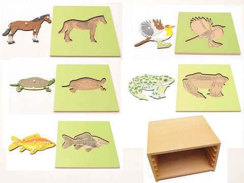 PinkMontesori 5 Zoology Animal Skeleton Puzzles & Cabinet - Pink Montessori Montessori Material for sale @ pinkmontessori.com