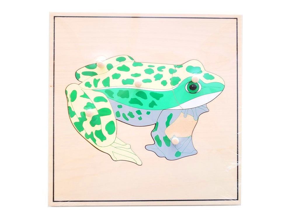 Frog Skeleton Puzzle (new)