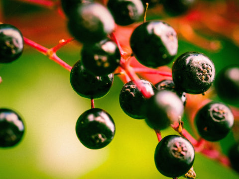 Elderberry for skin boosting glow